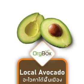 Local Avocado - Large (อะโวคาโด้พื้นเมืองจัมโบ้) 1 piece