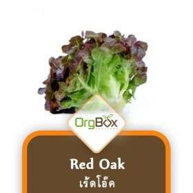 Organic Red Oak (เร้ดโอ๊ค) 300 g.