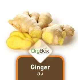 Organic Ginger (ขิง) 300 g.