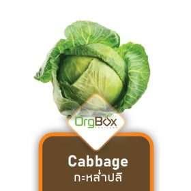 Organic Cabbage (กะหล่ำปลี) 1,000 g.