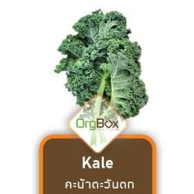 Organic Curled Kale (คะน้าตะวันตก) 100 g.