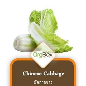 Organic Chinese Cabbage (ผักกาดขาว) 1000 g.