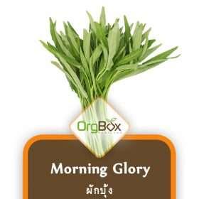 Organic Morning Glory (ผักบุ้ง) 300 g.