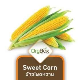 Organic Sweet Corn (ข้าวโพดหวาน)