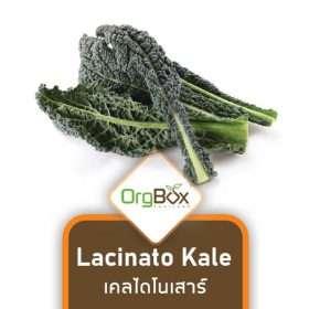 Organic Lacinato Kale (เคลไดโนเสาร์) 100 g.