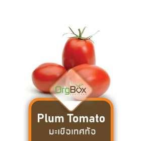 Organic Plum Tomato (มะเขือเทศท้อ) 500 g.