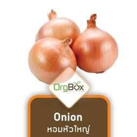 Organic Onion (หอมหัวใหญ่) 500 g.