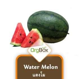 Water Melon - Large (แตงโมจัมโบ้) 1 Whole (3000g-4000g)