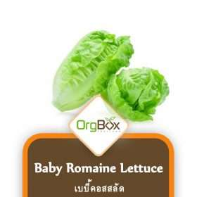 Organic Baby Romaine Lettuce (เบบี้คอสสลัด) 500 g.