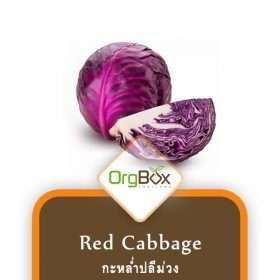 Organic Red Cabbage (กะหล่ำปลีม่วง) 500 g.