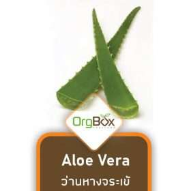 Aloe Vera (ว่านหางจระเข้) 500 g.