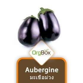 Organic Aubergine (มะเขือม่วง) 500 g.