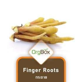 Organic Finger Roots (กระชาย) 200 g.