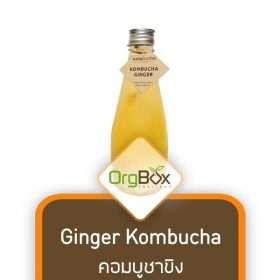 Ginger Kombucha (คอมบูชาขิง) 300 ml.